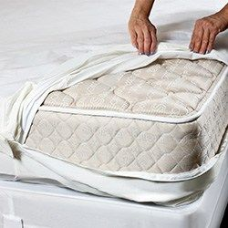 Best Bed Bug Mattress Encasement Reviews 2019 Buyers Guide The