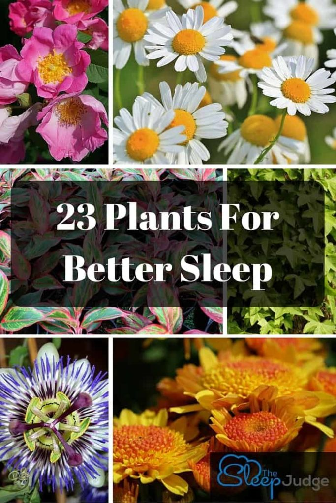 23 Plants For Your Bedroom That Will Help You Sleep