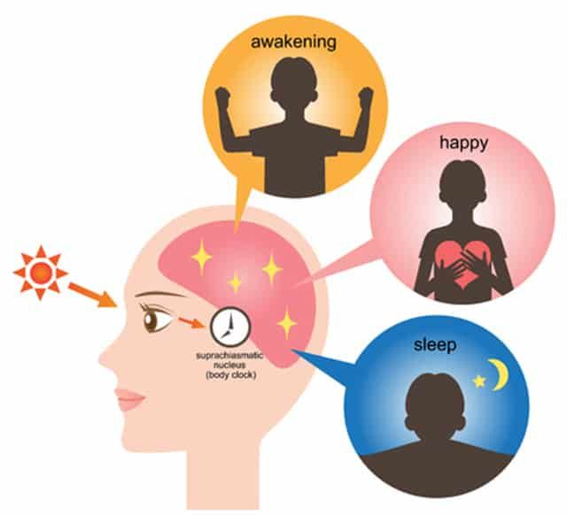 What Is Circadian Rhythm And Why Do You Need It