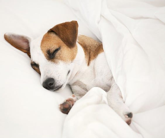 Do You Let Your Dog Sleep On Your Bed