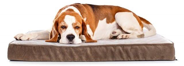 Dog Beds For Dog Crates Providing Comfort For Your