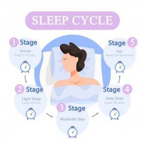 Sleep Cycle Infographic