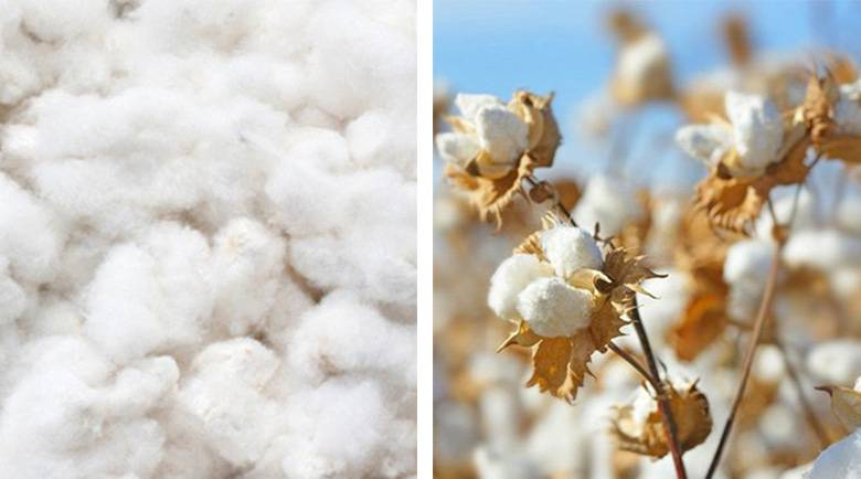 What Is The Difference Between Supima And Pima Cotton